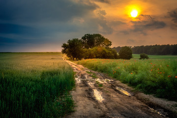 Fotobehang Platteland sunset in the field
