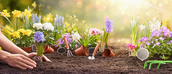Spring Gardening Works Concept. Garden Flowers, Plants and Tools on a Sunny Background.