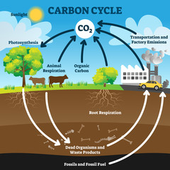Carbon cycle vector illustration. Labeled CO2 biogeochemical process scheme