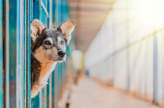 Stray Beautiful Dog Lean Out From Cage And Looking At Human. Dog Abandoned in Shelter and Waiting For His Family