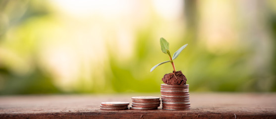 Financial planning, Money growth concept. Coins with young plant on table with backdrop blurred of nature Fototapete