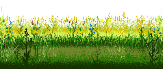 Canvas Prints Green Meadow with flowers. Sunny mood. Blooming forbs. Grass landscape. Isolated vector on white background. Horizontal view. Spring Summer Meadowland. Sun Grassland. Plants, Herbs. Bright beautiful scenery