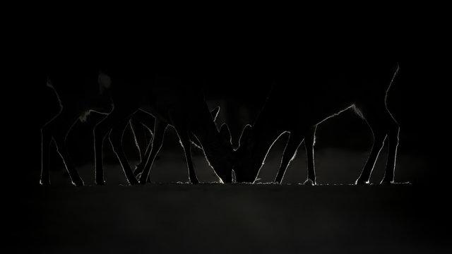 Group of Roe food, Dark