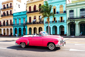 Garden Poster Havana old pink convertible classic car in front of colorful houses in havana cuba