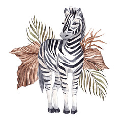 Fototapeta Watercolor illustration with African zebra and tropical leaves, isolated on white background