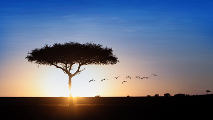 Wall Mural - Classic Blue Sky Sunset Behind Tree Silhouette