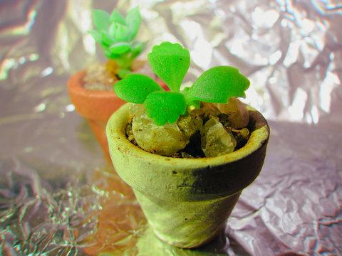 Foto macro de mini vasos de suculentas.