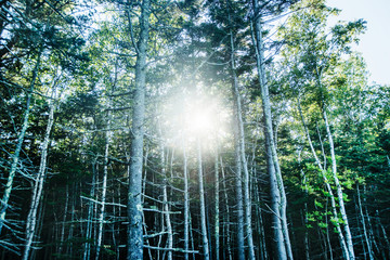 sun shining through the trees, Acadia National Park, Maine, United States, North America Wall mural