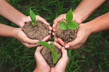 three hand group holding small tree growing on dirt with green grass background. eco earth day concept Fototapete