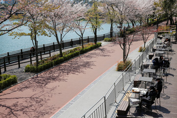 People enjoy the view while practicing social distancing during the global spread of the coronavirus disease (COVID-19), at a cafe near a cherry blossom trees street  Seokchon Lake park, in Seoul