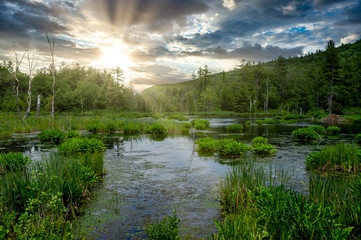 Wall Mural - Marshy Wilderness Pond Under the Setting Sun