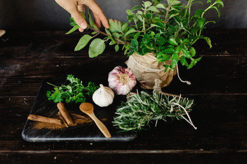 Various fresh herbs and spices on a table with person picking a leaf