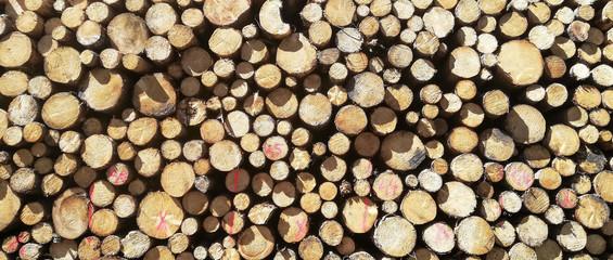 Fotobehang Brandhout textuur stack of wood tree cut