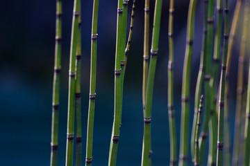 bambus stengel struktur grün und blau im garten draußen