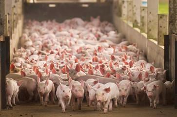 Agro industria sumiu