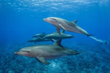 Fotorolgordijn Dolfijn dolphins in the sea
