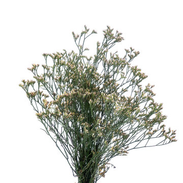 Dried white limonium branches isolated