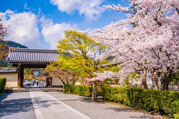 京都の春の風景 桜と寺 日本 Wall mural