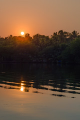 Fototapete - Jungle of palm trees with atmospheric haze at sunset, along a freswater lake in Eramalloor's Backwaters, a popular tourist destination and yoga retreat in Kerala, India