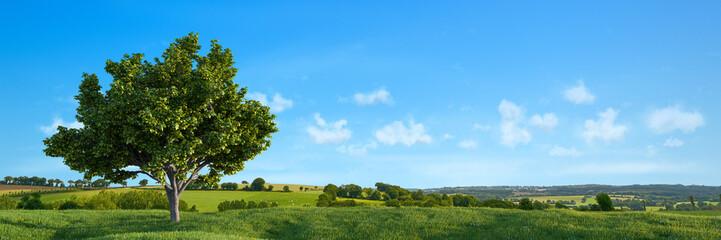 Natur Landschaft mit Baum und einem blauen Himmel Fotomurales