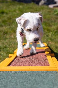 Agility (Hundesport)