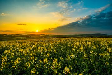 Fototapeta Wschód słońca nad polem rzepaków, małopolska, polska, jura obraz
