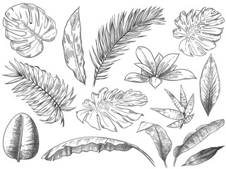 Wall Mural - Hand drawn tropical leaves. Sketch tropic plants leafs, hand drawn exotic floral leaf vector illustration set. Exotic outline, line tropic botanical monstera