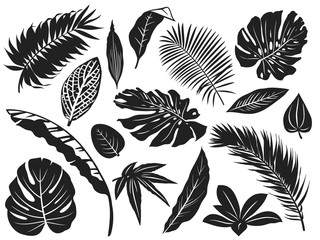 Wall Mural - Tropical leaves silhouette. Palm tree leaf, coconut trees and monstera leafs black silhouettes vector illustration set. Monochrome silhouette black tropical jungle greenery