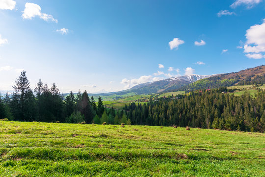 great outdoors on a sunny springtime day. beautiful countryside landscape in mountains. forest behind the meadow covered in fresh green grass. borzhava ridge in the distance