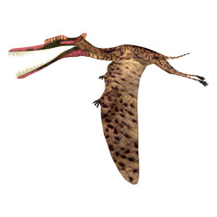 Zhenyuanopterus Pterosaur Flying - Zhenyuanopterus was a carnivorous Pterosaur reptile that lived in China during the Cretaceous Period.