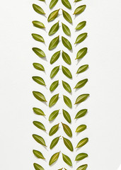 Leaf pattern in the form of tire marks on a white background