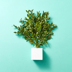 Twig tree and cube on turquoise background