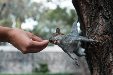 Squirrel Eating Nuts From Girl's Hand.