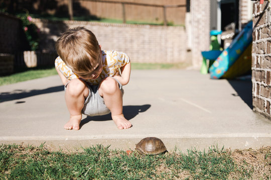 Boy looking at turtle crawling in garden