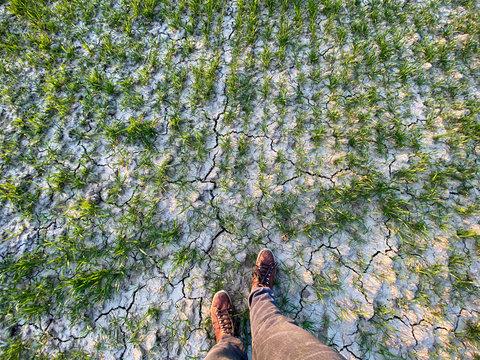 Von oben herab auf vertrocknetes Feld mit Füssen und Weizen