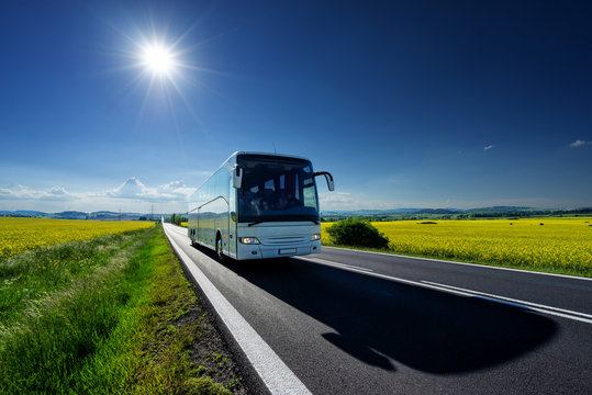 White bus driving on the asphalt road between the yellow flowering rapeseed fields under radiant sun in the rural landscape
