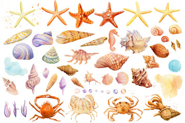 Watercolor starfish, shells, crabs, seahorse on an isolated background, hand drawing