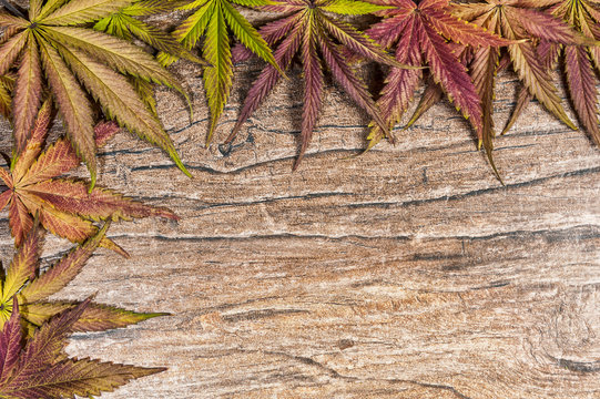 High Angle View Of Cannabis On Table