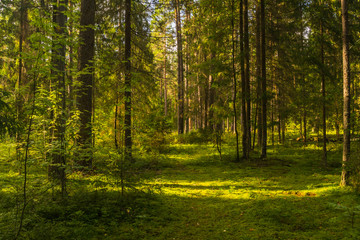 Garden Poster Forest sun rays in the forest