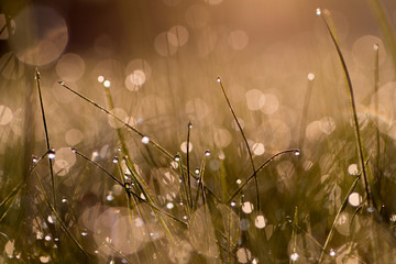Fototapeta Close-up Of Plants Against Water