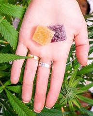 Fototapeta edibles marijuana obraz