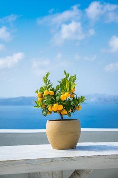Little potted lemon tree against the blue sea
