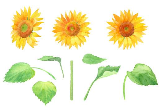 夏の花:ひまわりのエレメントの水彩イラスト、トレースベクター