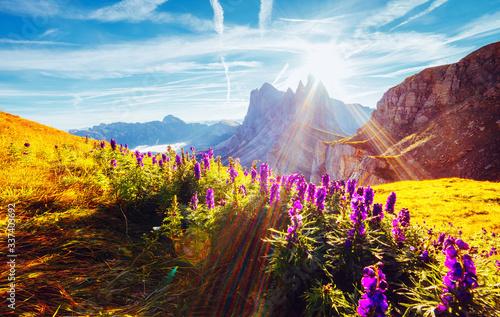 壁紙(ウォールミューラル) Morning view of the alpine valley in sunlight. Location place Puez-Geisler National Park, Seceda peak, Italy.