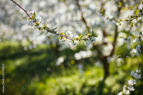 壁紙(ウォールミューラル) Bright ornamental garden with blooming trees on a sunny day.