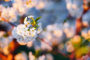 壁紙(ウォールミューラル) - Bright ornamental garden with blooming trees on a sunny day.