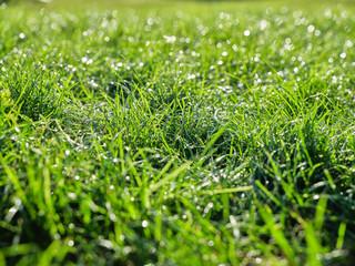 Trawa zielona w ogrodzie