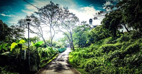 Fototapeta Dirt Road Amidst Trees Against Sky