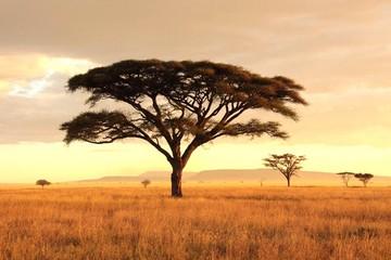 Fototapeta Bare Tree On Field Against Sky