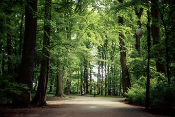 Beautiful scenery of a road in the forest with tall green trees Fotomurales